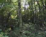 Terreno Agricolo in Vendita a Ariano Irpino