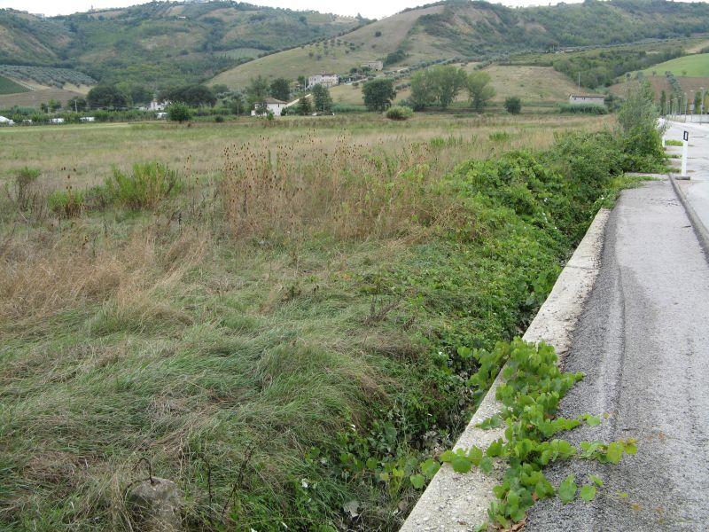 Terreno Edificabile Comm.le/Ind.le in vendita a Controguerra, 9999 locali, zona Località: S.P.BonificadelTronto, Trattative riservate | Cambio Casa.it