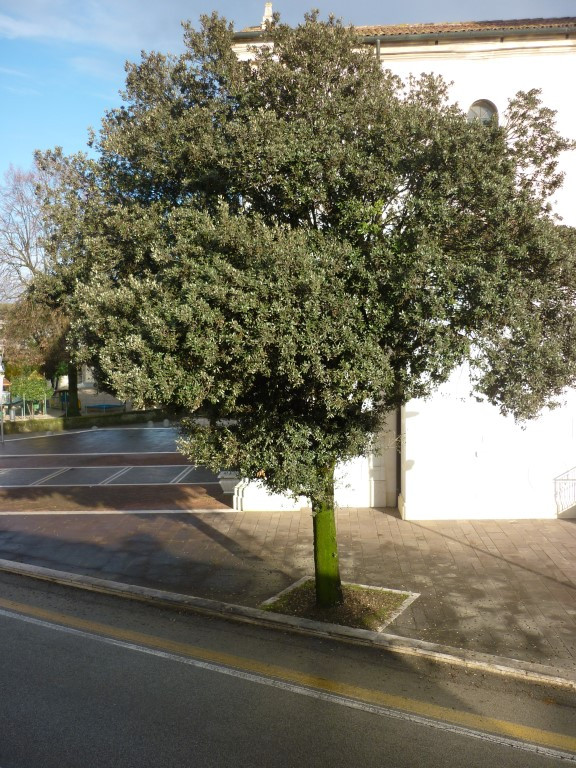 Bilocale Treviso  7