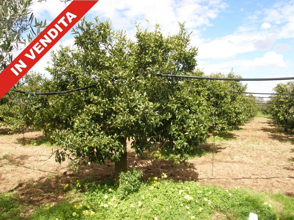 Terreno Agricolo in vendita a Lacco Ameno, 9999 locali, prezzo € 86.000 | Cambio Casa.it