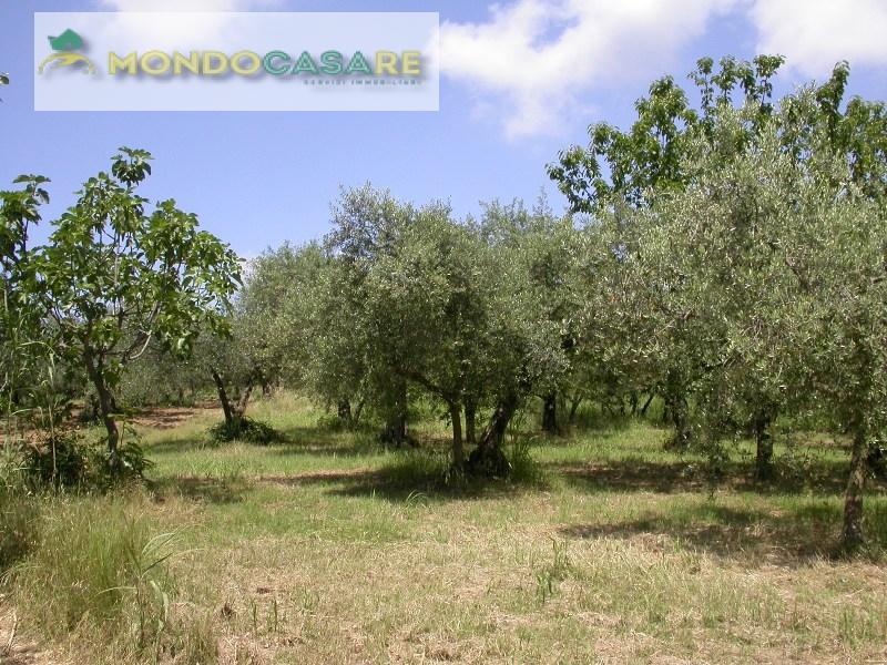 Terreno Agricolo in vendita a Moricone, 9999 locali, prezzo € 19.000 | Cambio Casa.it