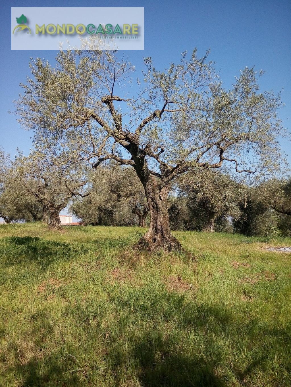 Terreno Agricolo in vendita a Palombara Sabina, 9999 locali, prezzo € 7.000   CambioCasa.it
