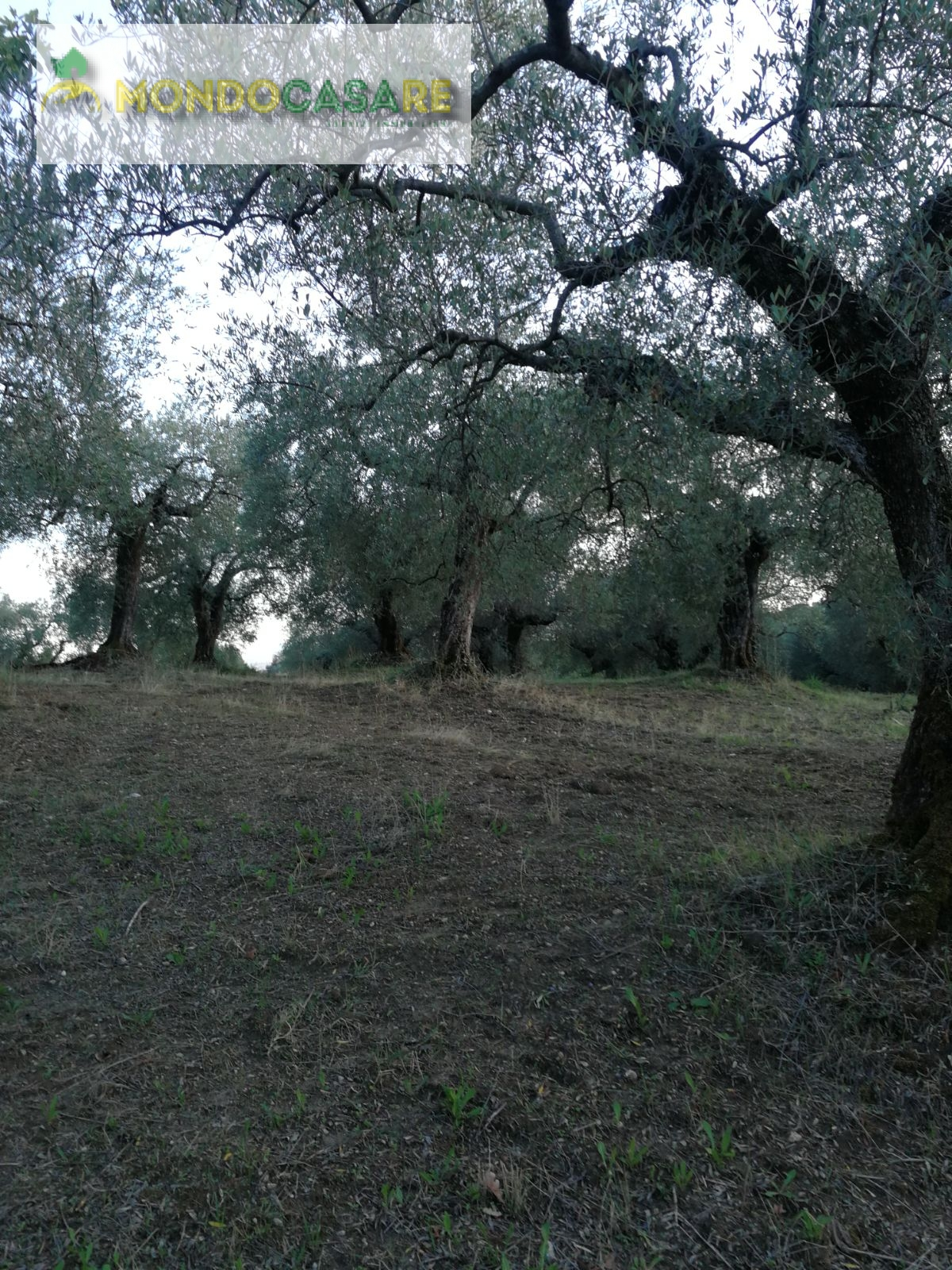 Terreno Agricolo in Vendita a Guidonia Montecelio