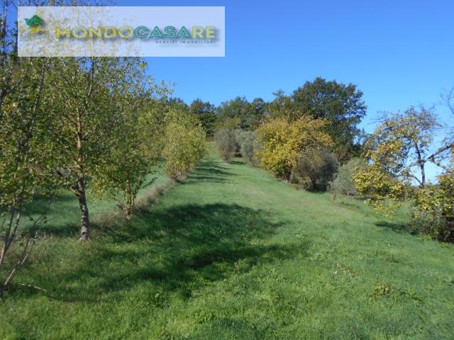 Terreno Agricolo in vendita a Palombara Sabina, 9999 locali, prezzo € 15.000   CambioCasa.it