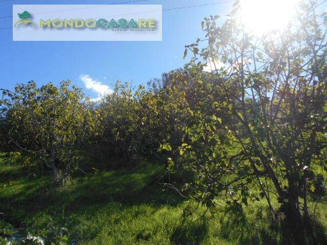 Terreno Agricolo in vendita a Palombara Sabina, 9999 locali, prezzo € 5.000   CambioCasa.it