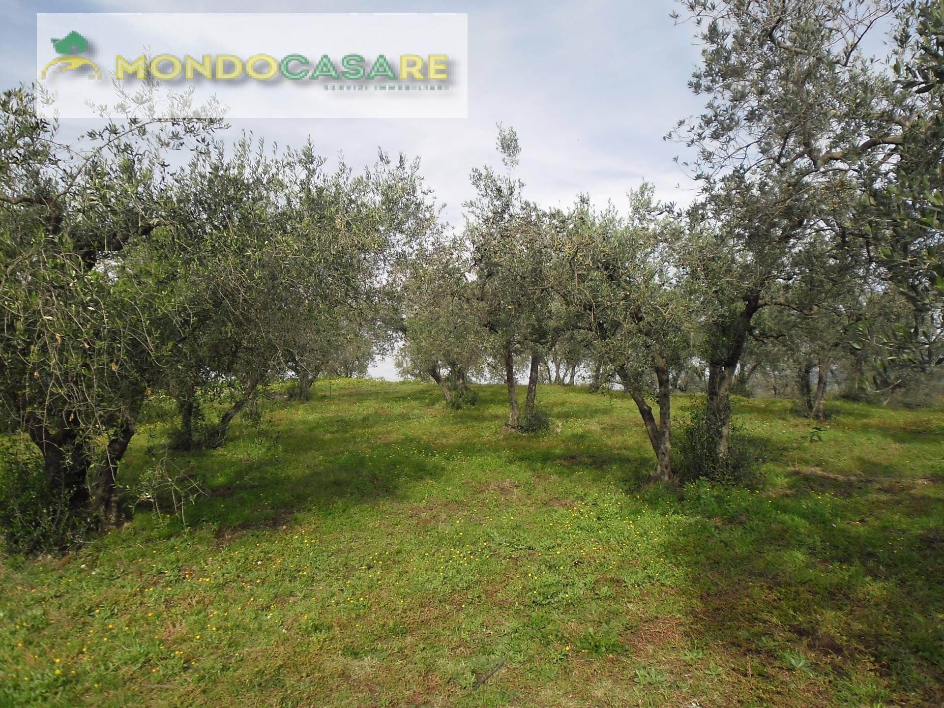 Terreno Agricolo in vendita a Moricone, 9999 locali, prezzo € 11.500 | CambioCasa.it