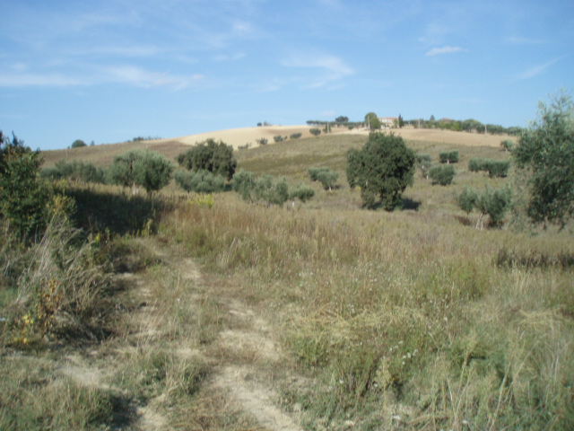 Terreno Agricolo in Vendita a Controguerra