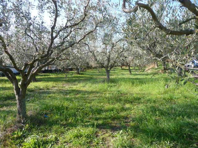 Terreno Edificabile Residenziale in vendita a Colonnella, 9999 locali, prezzo € 70 | Cambio Casa.it