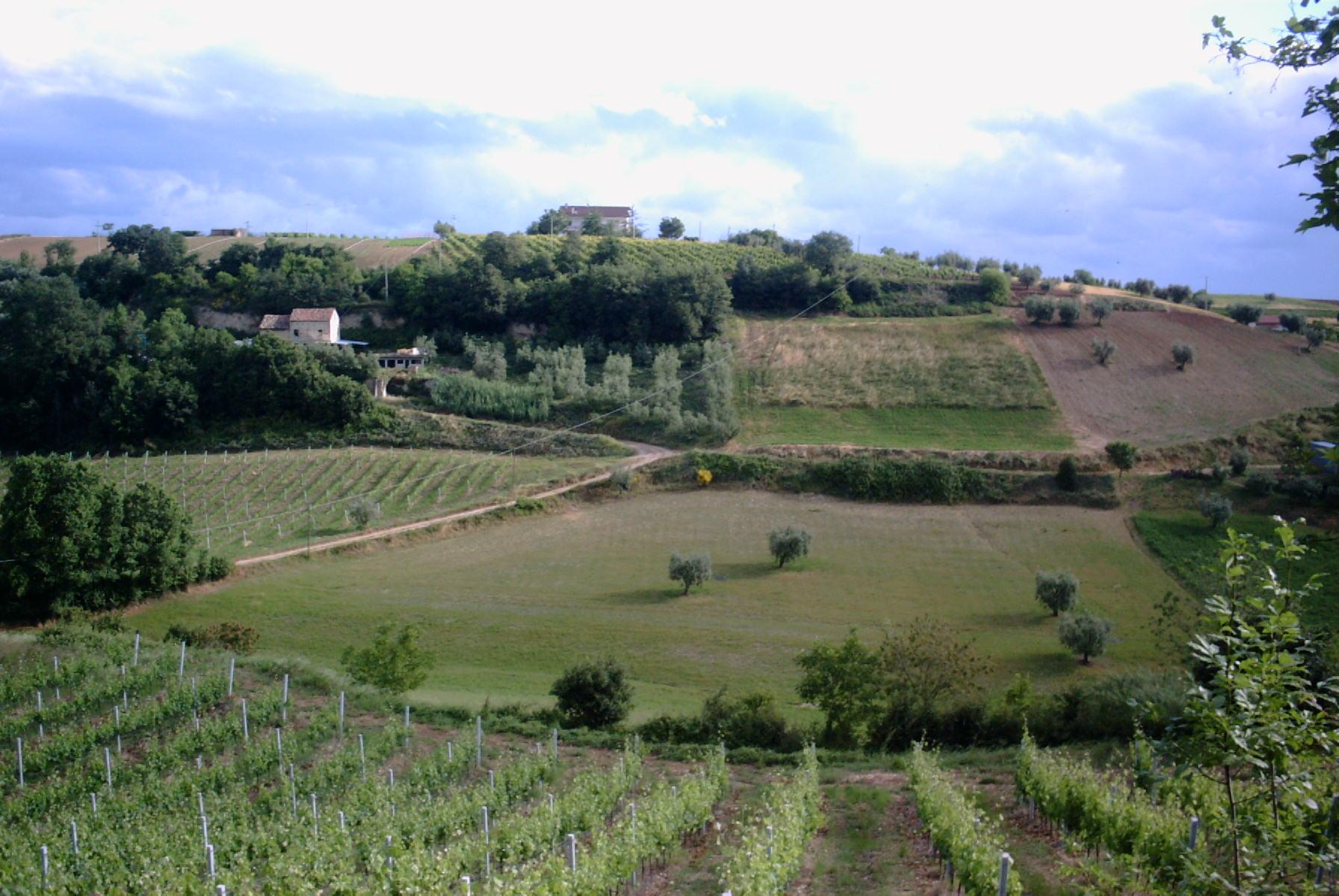 Azienda Agricola in vendita a Massignano, 9999 locali, prezzo € 300.000 | Cambio Casa.it
