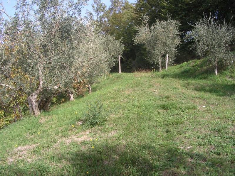 Terreno Agricolo in vendita a Arpino, 9999 locali, prezzo € 30.000 | CambioCasa.it