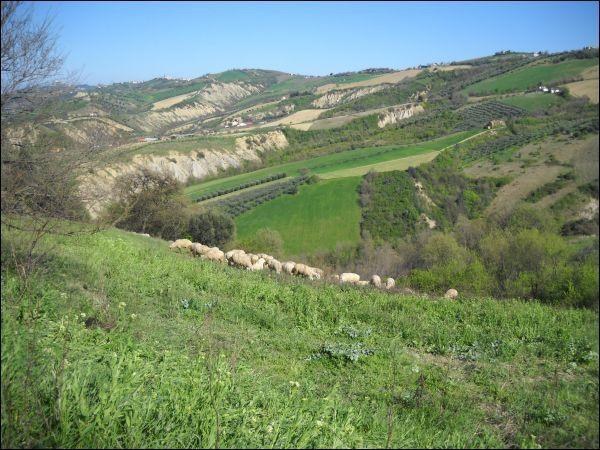 Terreno Agricolo in vendita a Ancarano, 9999 locali, zona Località: ZonaVallatadelTronto, prezzo € 120.000 | Cambio Casa.it