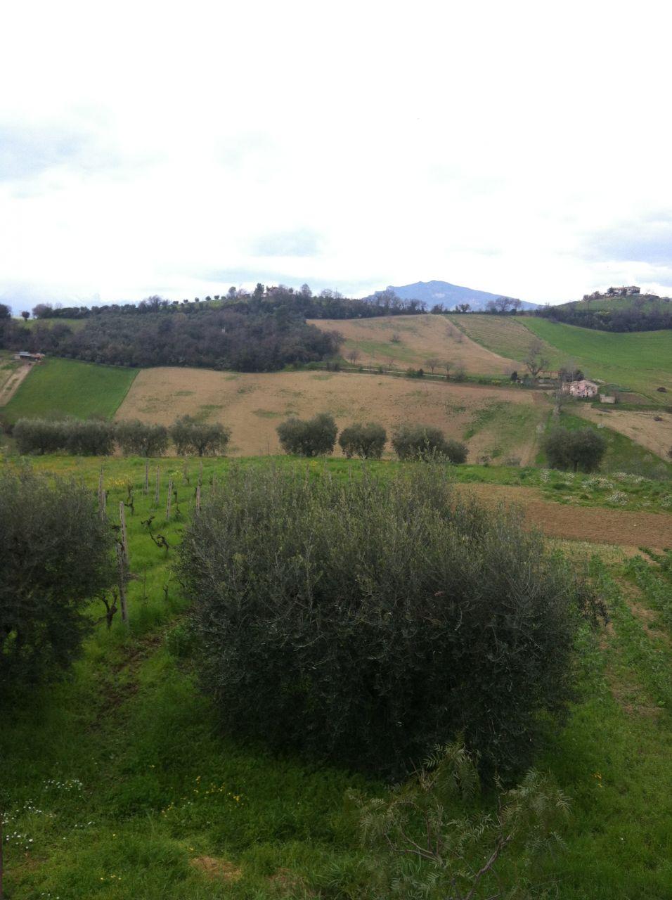 Terreno Agricolo in vendita a Castorano, 9999 locali, zona Località: SanSilvestro, prezzo € 125.000 | CambioCasa.it