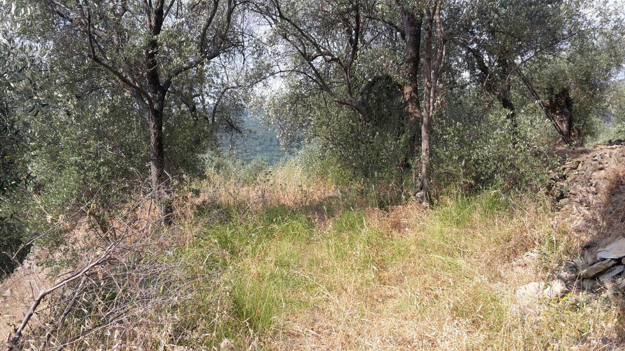 Terreno Agricolo in vendita a San Bartolomeo al Mare, 9999 locali, prezzo € 6.000   CambioCasa.it