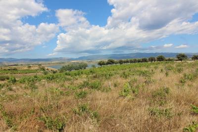 Vai alla scheda: Terreno Agricolo Vendita Quartu Sant'Elena