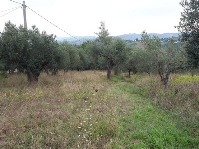 Terreno Agricolo in vendita a Manoppello, 9999 locali, zona Zona: Fornace, prezzo € 20.000 | Cambio Casa.it