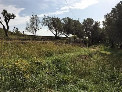 Vai alla scheda: Terreno  Residenziale Vendita Catanzaro