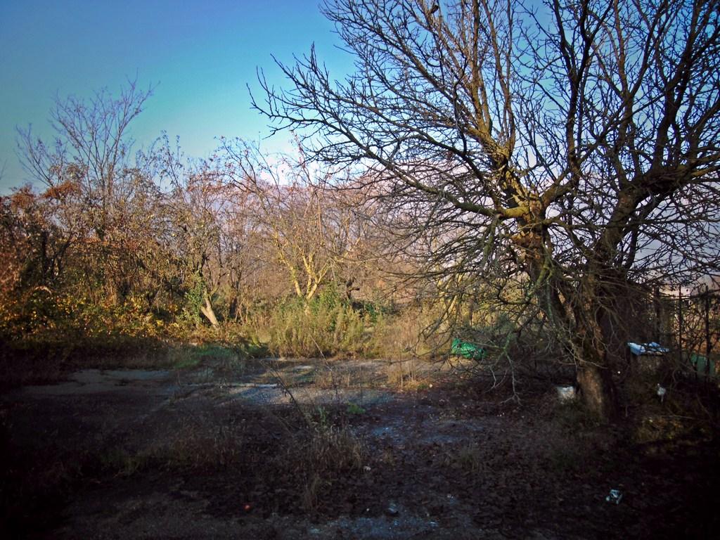 Terreno Agricolo in Vendita a Galbiate