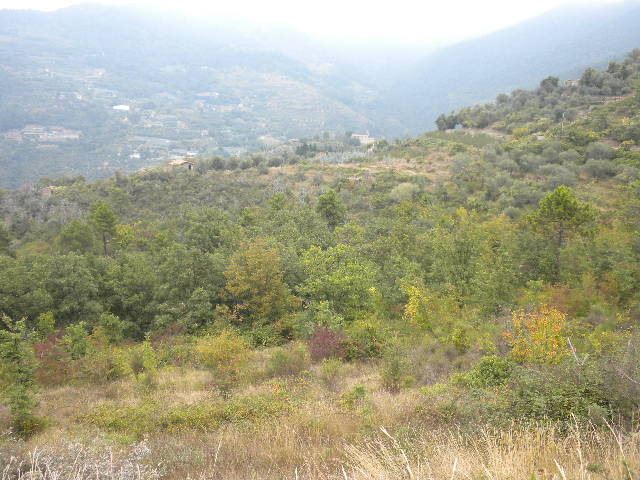 Terreno Agricolo in vendita a Perinaldo, 9999 locali, zona Zona: Suseneo, prezzo € 140.000 | CambioCasa.it