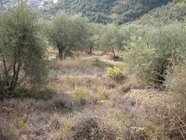 Terreno Agricolo in vendita a Dolceacqua, 9999 locali, prezzo € 100.000 | Cambio Casa.it