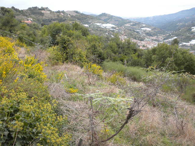 Terreno Agricolo in Vendita a Vallecrosia