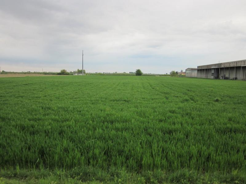 Terreno Edificabile Residenziale in Vendita a Argenta