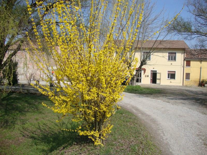 Soluzione Indipendente in affitto a Ferrara, 4 locali, zona Località: CocomarodiFocomorto, prezzo € 460 | Cambio Casa.it