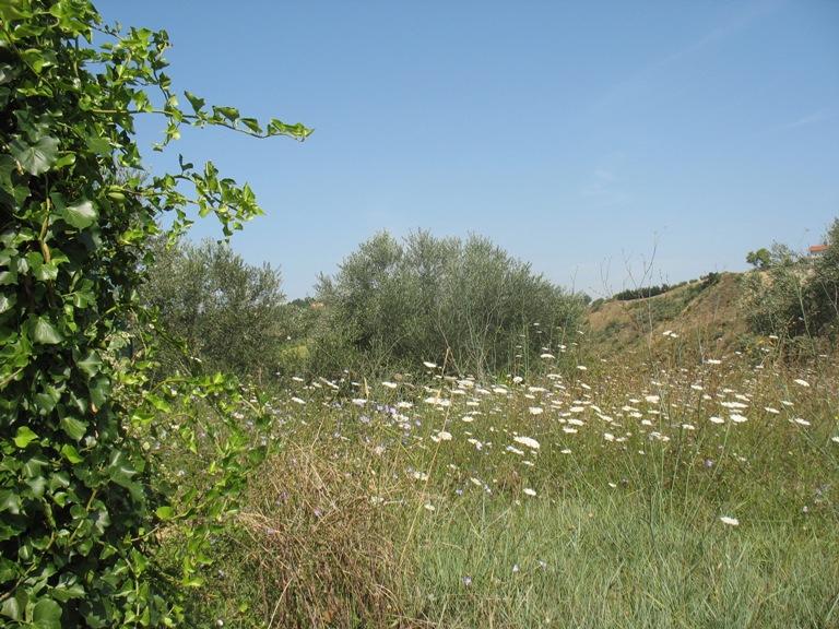 Terreno Agricolo in vendita a Spoltore, 9999 locali, zona Località: VillaS.aMaria, prezzo € 65.000 | Cambio Casa.it