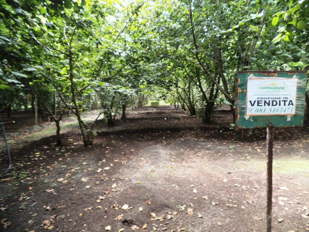 Terreno Agricolo in Vendita a Avella
