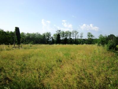 Vai alla scheda: Terreno Agricolo Vendita - Sant'Agata de' Goti (BN) - Codice 40SH