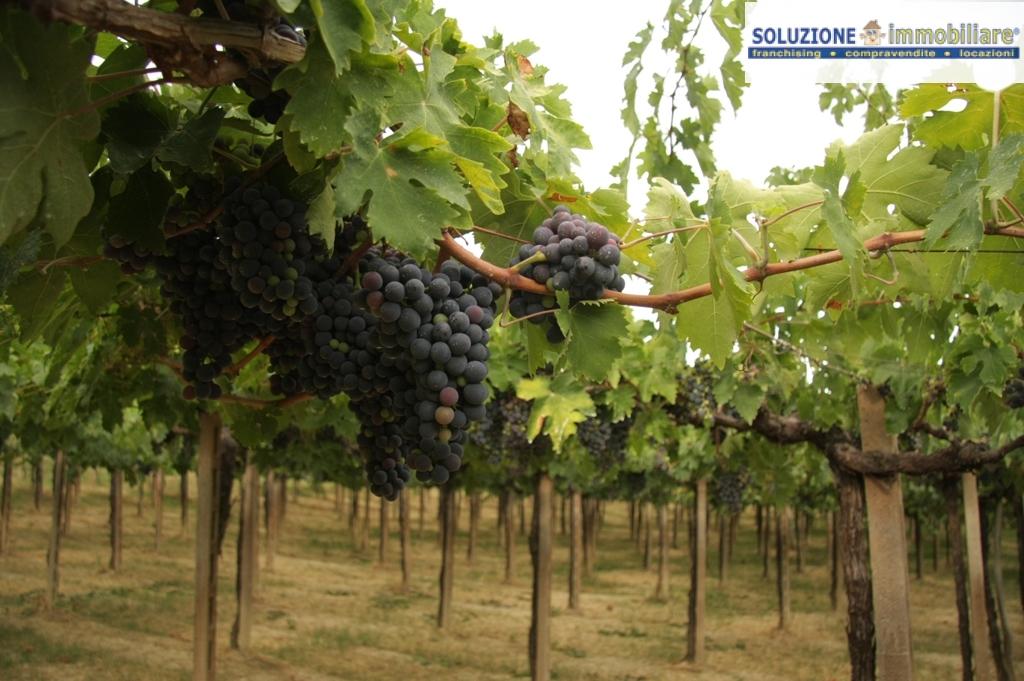 Terreno Agricolo in vendita a Torrevecchia Teatina, 9999 locali, prezzo € 85 | CambioCasa.it