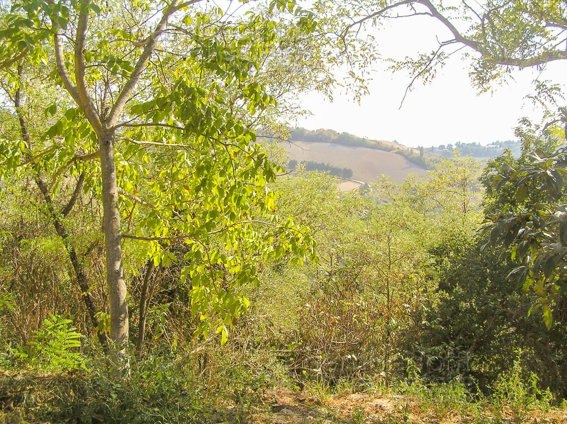 Bilocale Urbino  5