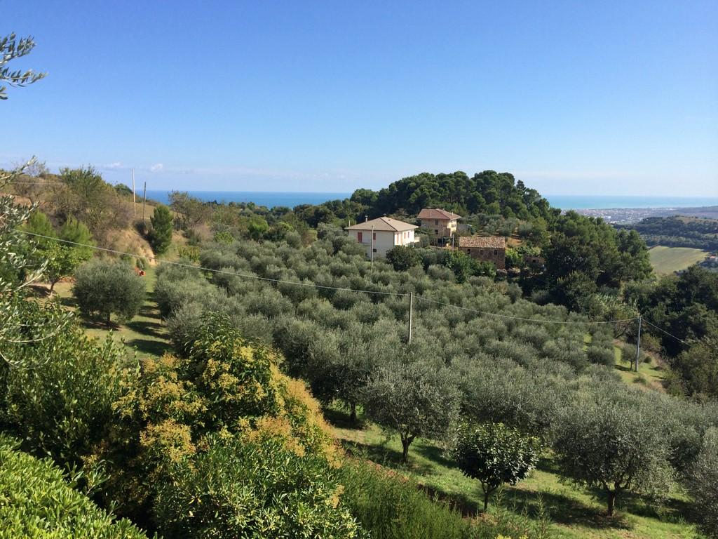 Terreno Agricolo in vendita a Monteprandone, 9999 locali, prezzo € 85.000 | CambioCasa.it