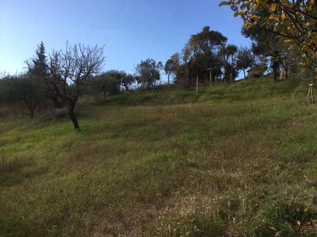 Terreno Edificabile Residenziale in Vendita a Monsampolo del Tronto