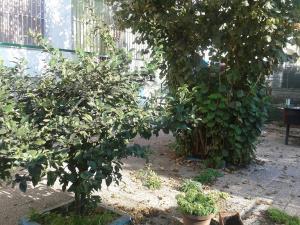 Vai alla scheda: Appartamento Vendita - Marigliano (NA) - Codice MAR 115 C M G