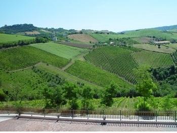 Azienda Agricola in vendita a Montefiore dell'Aso, 9999 locali, prezzo € 4.200.000 | Cambio Casa.it