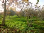 Vai alla scheda: Terreno Agricolo Vendita Caprarola