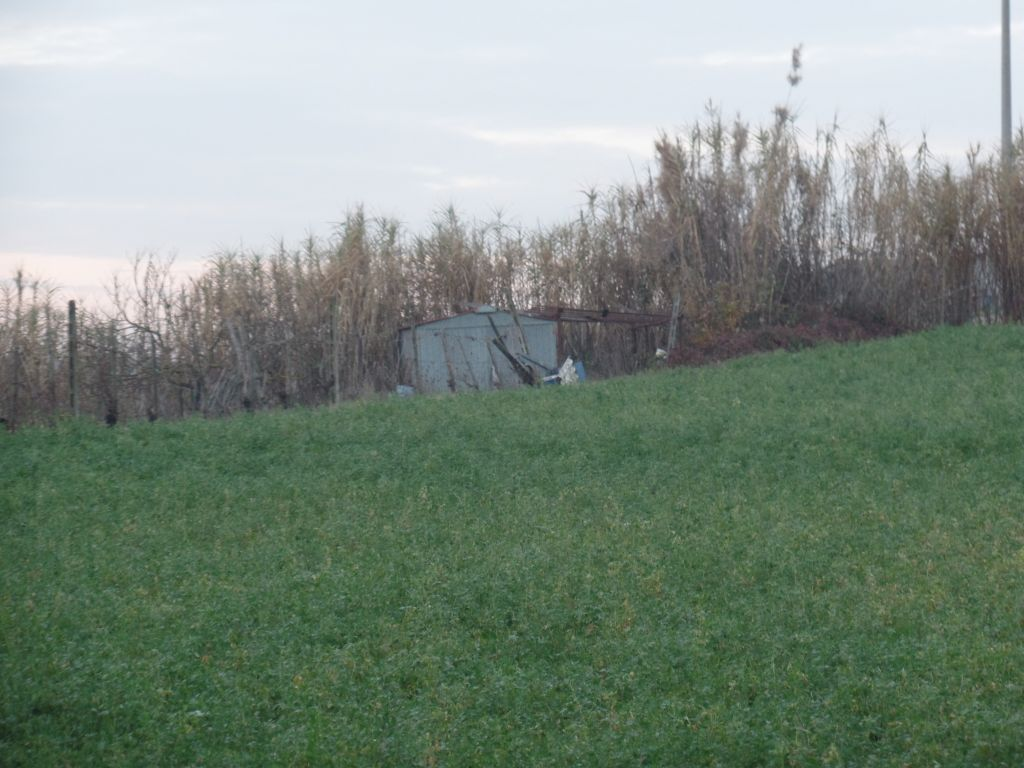 Terreno Agricolo in Vendita a Terranuova Bracciolini