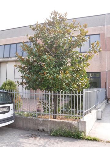 Altro in vendita a Monteforte d'Alpone, 9999 locali, zona Zona: Costalunga, prezzo € 160.000 | Cambio Casa.it