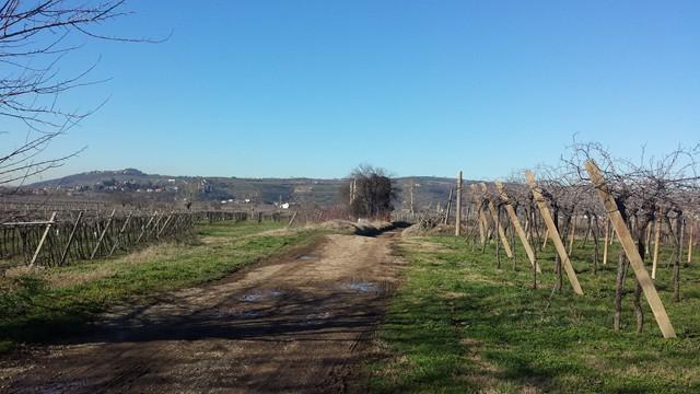 Terreno Agricolo in vendita a Soave, 9999 locali, prezzo € 250.000 | Cambio Casa.it