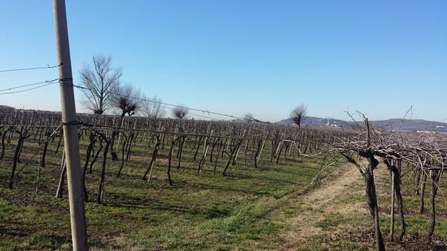 Terreno Agricolo in vendita a Monteforte d'Alpone, 9999 locali, prezzo € 150.000 | Cambio Casa.it