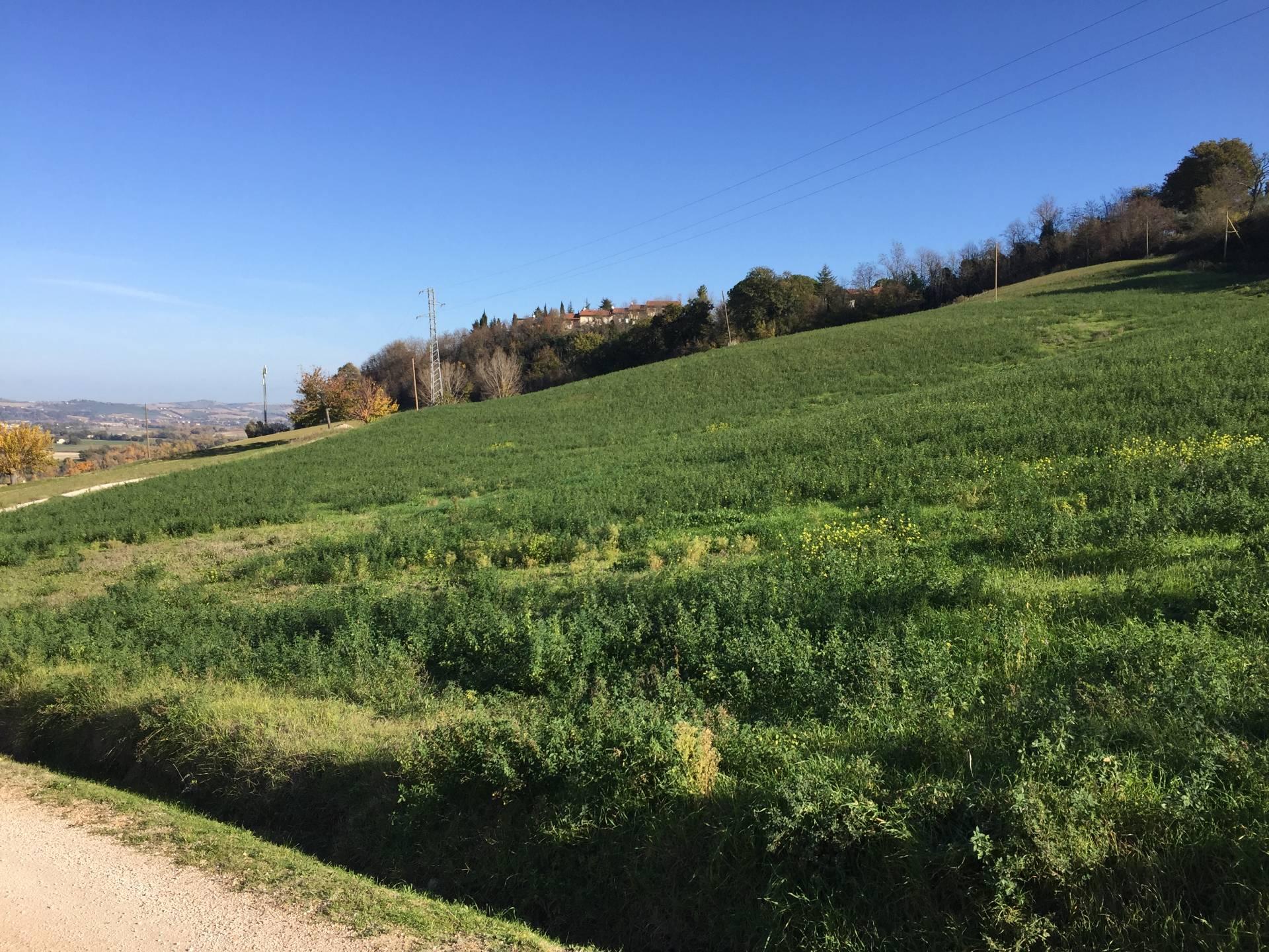 Terreno Agricolo in vendita a Castelleone di Suasa, 9999 locali, Trattative riservate | CambioCasa.it
