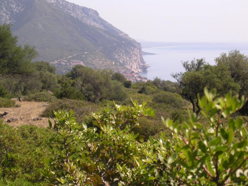 Terreno vendita DORGALI (NU) -  MQ