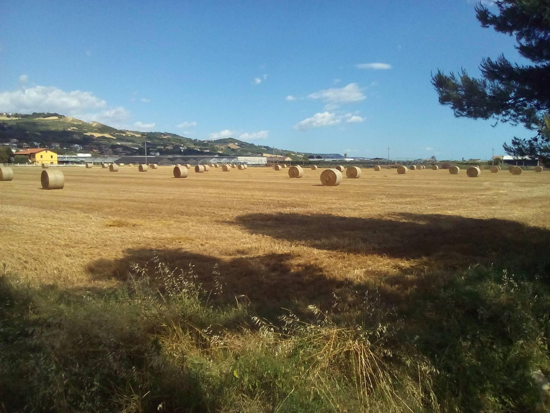 Terreno Agricolo in Vendita a Martinsicuro