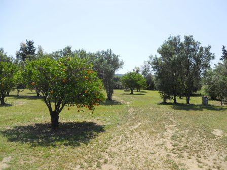 Terreno vendita VILLASIMIUS (CA) -  MQ