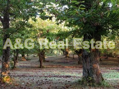 Terreno Edificabile Residenziale in vendita a Castel del Piano, 9999 locali, prezzo € 200.000 | CambioCasa.it