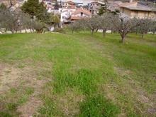 Terreno vendita COLONNELLA (TE) - 7 LOCALI - 4000 MQ