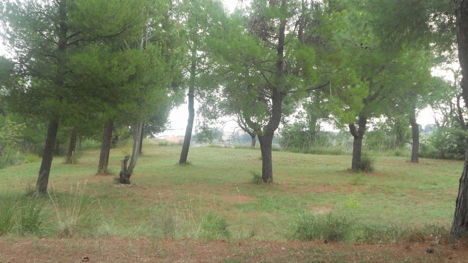 Terreno Agricolo in vendita a Massignano, 9999 locali, Trattative riservate | Cambio Casa.it