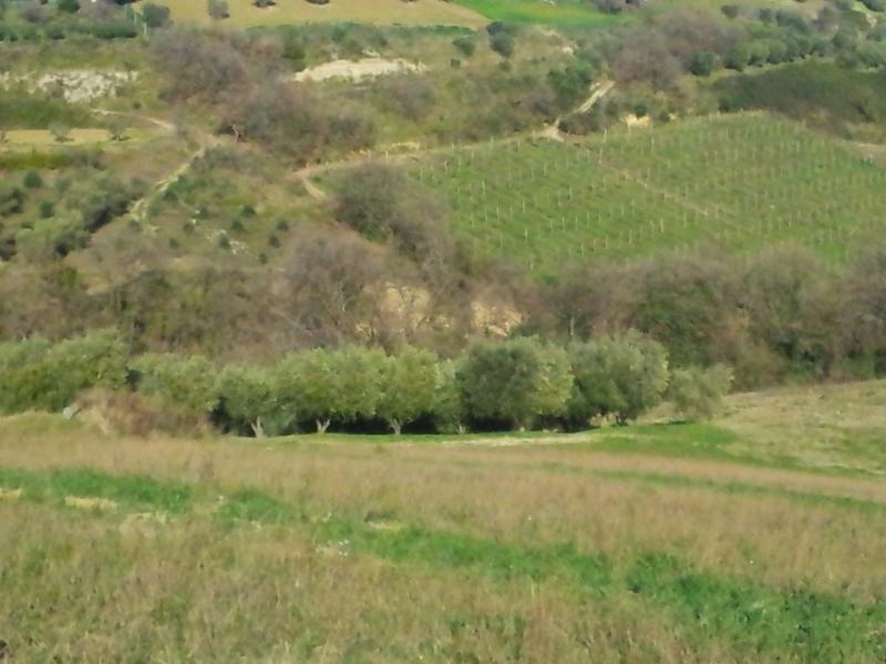 Terreno Agricolo in vendita a Castignano, 9999 locali, prezzo € 15.000 | Cambio Casa.it