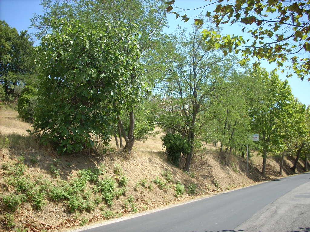 Terreno Edificabile Residenziale in vendita a Colonnella, 9999 locali, prezzo € 200.000 | Cambio Casa.it