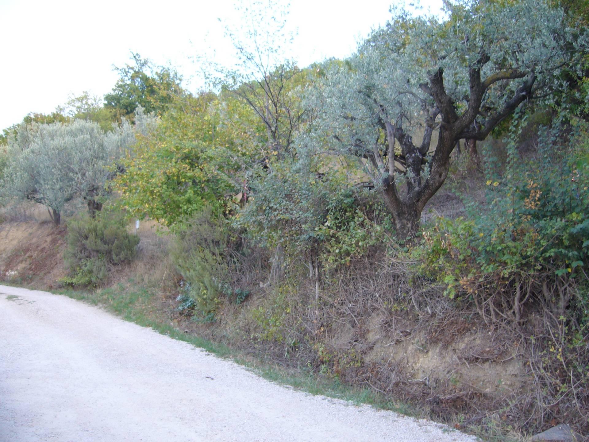 Terreno Agricolo in vendita a Colonnella, 9999 locali, prezzo € 17.000 | Cambio Casa.it